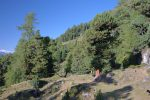 Le chemin descend par un chemin forestier par Plan di Arjes 2015m puis Maretse