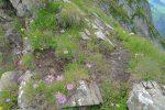 Beaucoup de fleurs le long de la crête, mais le regard est bien attiré à surveiller où nous posons les pieds. Tant pis pour la vue (en plus bien voilée depuis quelque temps)