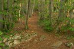 Le chemin se poursuit toujours en forêt, mais plus large