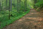 On s'enfonce dans la forêt avec profusion d'ail des ours