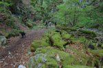 La mousse colonise les rochers et arbres. Vue arrière