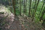 On traverse la forêt