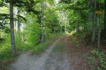 La descente en forêt (Côte au Renard), un peu plus pentue