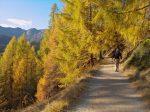 Et nous passons à travers une forêt clairsemée, jolies couleurs d'automne