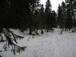 La partie finale de la sortie de forêt est assez raide, la photo ne le restitue pas bien