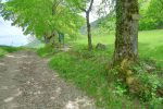 On quitte le sentier large pour le Chemin des Vaches à droite.