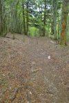 Courte section en forêt