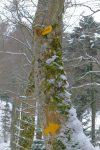 Le panneau fait corps avec le tronc d'arbre !