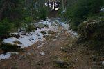 Nous montons la dernière pente avant le plateau de l'Arpille, la descente se fera au mieux dans la forêt clairsemée à droite