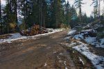 On sort de la forêt au Pt1564