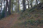 Une dernière montée à travers ces arbres pour arriver à l'Arpille