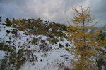 Quelques couleurs d'automne dans ce monde blanchi