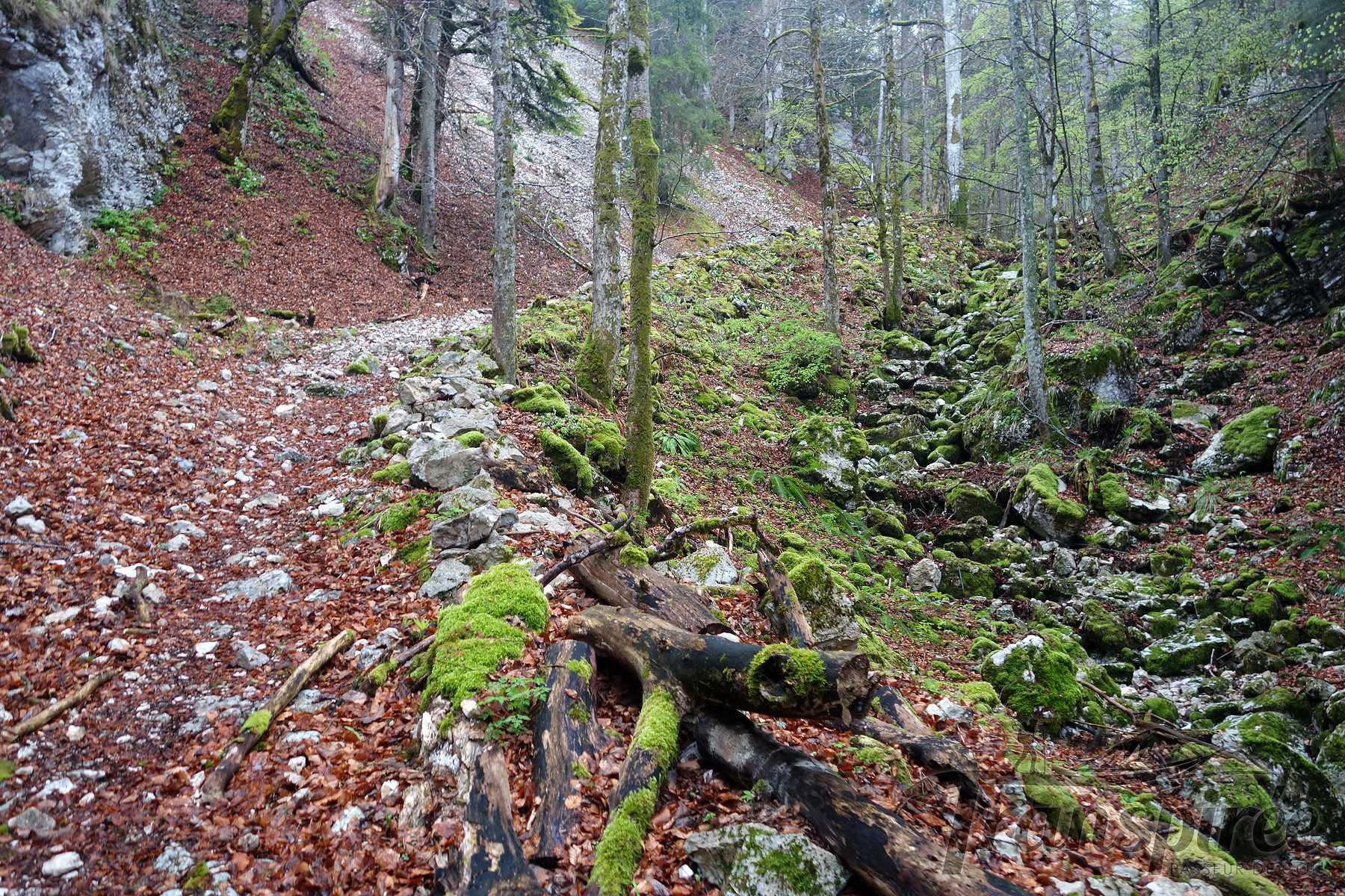 Randonnée à la Combe Biosse depuis le Val de Ruz