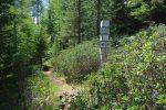 Le long du sentier, il y a 13 panneaux indicateurs sur la faune et flore, intéressants. Celui-ci nous apprend que cette forêt a brulé en 1949, qu'il a fallu plus d'une semaine pour éteindre le feu