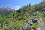 Une tranchée dans la forêt qui permet de découvrir les montagnes environnantes (La Brinta, ...)