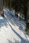Le passage en forêt, toujours épique