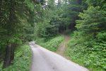 Départ depuis la Foret de Cornilly, sur la route menant à Javerne et juste au niveau du panneau jaune entouré de noir interdisant l'accées au 3.5t. Il y a quelques places de parcs. On part directement dans la forêt