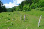 On bifurque à gauche par ce chemin forestier