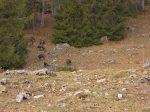 Je croise un troupeau de chamois