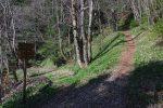Le chemin de la Vie de Chaux (à droite), ça monte fort et c'est plein d'ail des ours au début
