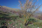 La couleur de cet arbre m'a plu