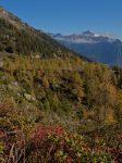 Les couleurs d'automnes sont bien présentes