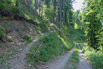 On traverse la route, le chemin est pentu, avec les marches en bois au fond