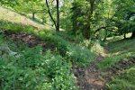 On rentre doucement dans la forêt, terrain défoncé par les animaux
