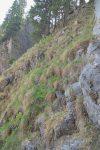 Même point de vue, mais en regardant vers le haut. Terrain entre mottes de terres et rochers