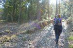 Puis la route forestière