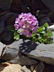 Des jolies fleurs au bord du lac, mais dont le nom m'est inconnu