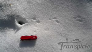 trace d'animaux neige